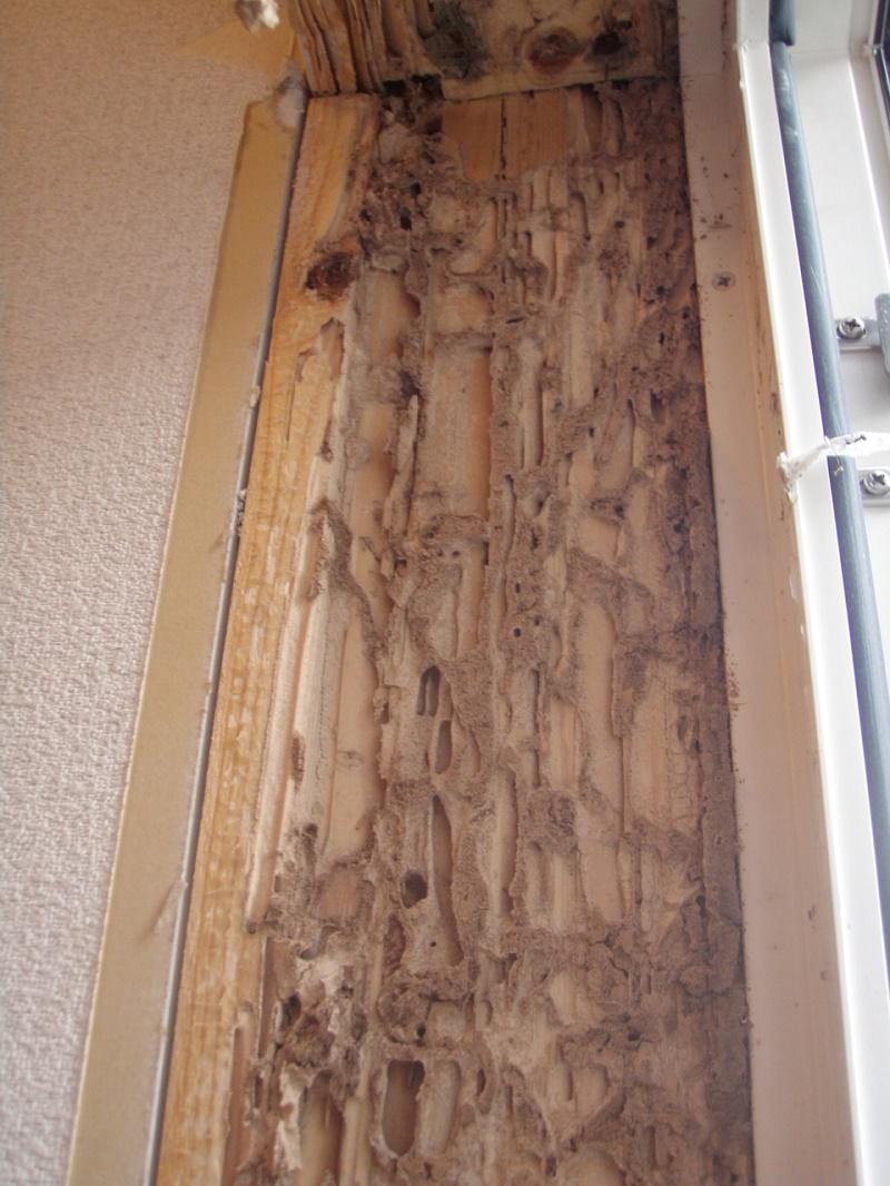 窓まわりの柱まぐさはやられた.JPG